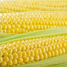 Насіння кукурудзи цукрової Тусон F1 Syngenta від 5 г, Фасовка: Міні упаковка 5 г