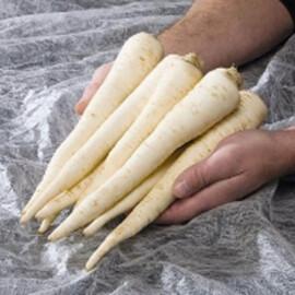 Семена петрушки корневой Игл Bejo от 1 г, Фасовка: Мини упаковка 1 г