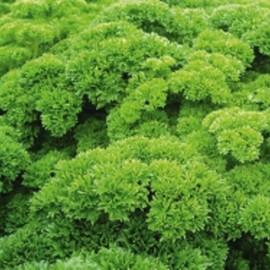 Семена петрушки кудрявой Петра Bejo от 1 г, Фасовка: Мини упаковка 1 г