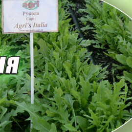 Семена рукколы Агрис Италия Аgri Saaten 50 г, Фасовка: Проф упаковка 50 г
