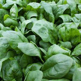 Семена шпината Боа Rijk Zwaan 25 000 шт, Фасовка: Проф упаковка 25 000 шт