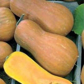 Семена тыквы Новинка Nasko от 250 шт, Фасовка: Проф упаковка 250 шт