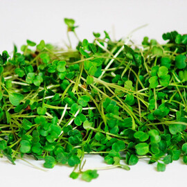 Семена микрозелени руколы Seedera 10 г