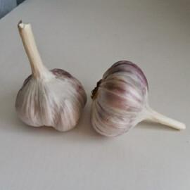 Чеснок (озимый) Ирен от 2 кг Triumfus Onion Products, Фасовка: Проф упаковка 2 кг