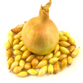 Лук севок (озимый) Шекспир 10 кг (8-21мм) Triumfus Onion Products
