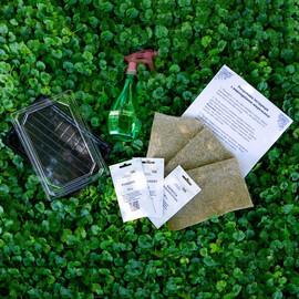 """Набор для выращивания микрозелени """"Салатный микс"""""""