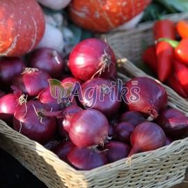 Лук севок (озимый) Ред Барон 10 кг (8-21мм) Triumfus Onion Products