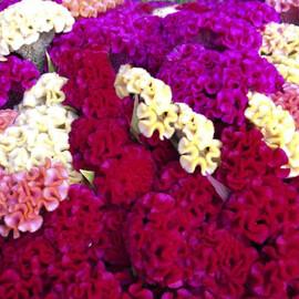 Семена целозии гребенчатой Кораловый сад смесь 5 гр Hem Zaden