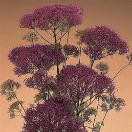Насіння трахеліума Мічиган фіолетовий 100 шт драже Pan Аmerican