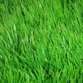 Газонная трава Дюймовочка /Thamberlina DLF Trifolium (Дания) 100 г, Фасовка: Проф упаковка 100 г