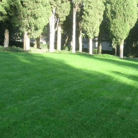 Газонная трава Сухостойкий 400 г, Фасовка: Проф упаковка 400 г