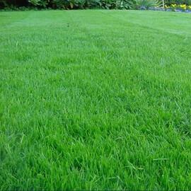 Газонная трава Тенневой газон /Park DLF Trifolium (Дания) 100 г, Фасовка: Проф упаковка 100 г