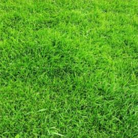 Газонная трава Универсальная DLF Trifolium (Дания) 100 г, Фасовка: Проф упаковка 100 г
