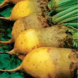 Семена свеклы кормовой Екендорфский желтый Украина 300 г