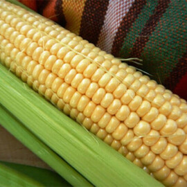 Насіння кукурудзи цукрової Дайнеріс (Барселона) F1 Мнагор від 5 г, Фасовка: Проф упаковка 1 000 шт