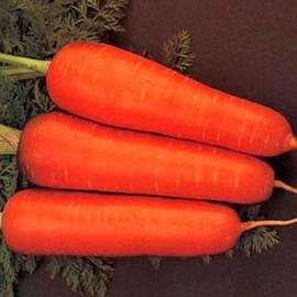 Насіння моркви Курода Шантане Sakata 250 г, Фасовка: Проф упаковка 250 г