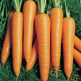 Семена моркови Вита Лонга Bejo от 1 г, Фасовка: Мини упаковка 1 г