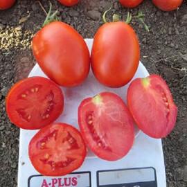 Семена томата детерминантного Дино F1 Clause от 1 000 шт, Фасовка: Проф упаковка 1 000 шт