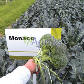 Насіння капусти броколі Монако F1 Syngenta від 20 шт, Фасовка: Проф упаковка 2 500 шт