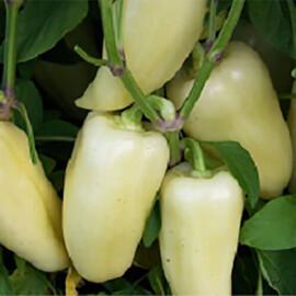 Семена перца Хаски F1 Enza Zaden 500 шт, Фасовка: Проф упаковка 500 шт