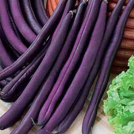 Насіння квасолі Фіолетова Hortus від 250 г, Фасовка: Проф упаковка 250 г