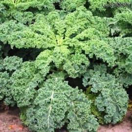 Насіння капусти листової Кале Hortus 100 г, Фасовка: Проф упаковка 100 г