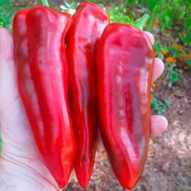 Семена перца Маркони ред Hortus от 10 г, Фасовка: Проф упаковка 10 г
