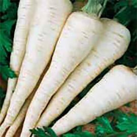 Семена петрушки Алба Hortus 500 г, Фасовка: Проф упаковка 500 г
