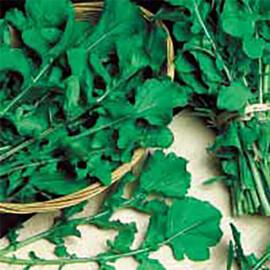 Семена рукколы Колтивата Hortus от 50 г, Фасовка: Проф упаковка 50 г