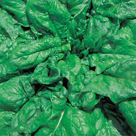 Семена шпината Лонг Стендинг Hortus 500 г, Фасовка: Проф упаковка 500 г