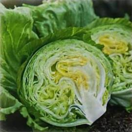 Насіння салату Вісмар Hazera 1 000 шт драже, Фасовка: Проф упаковка 1 000 шт драже