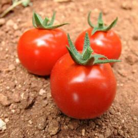 Семена томата индетерминантного Арома F1 Yuksel Tohum 100 шт, Фасовка: Проф упаковка 100 шт