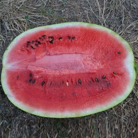 Семена арбуза Ледус F1 Lark Seeds 1 000 шт, Фасовка: Проф упаковка 1 000 шт