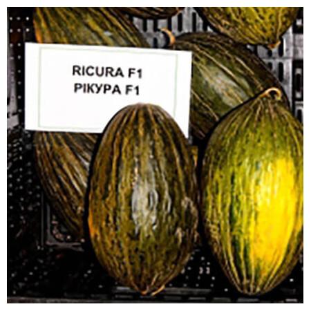 Семена дыни Рикура F1 Rijk Zwaan от 100 шт, Фасовка: Мини упаковка 100 шт