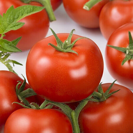Семена томата индетерминантного Ронда F1 Ergon от 100 шт, Фасовка: Проф упаковка 100 шт
