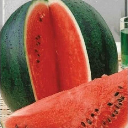 Семена арбуза Шуга Бейби United Genetics 500 гр