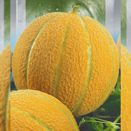 Семена дыни Бест Джамбо (Ефиопка) Hortus 50 г, Фасовка: Проф упаковка 50 г