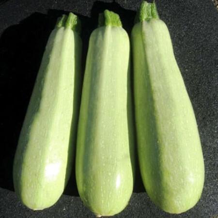 Семена кабачка Элеонор F1 United Genetics 50 шт, Фасовка: Средняя упаковка 50 шт