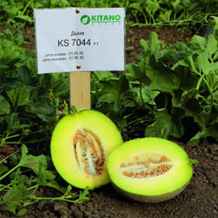 Насіння дині КС 7044 F1 Kitano Seeds від 100 шт, Фасовка: Проф упаковка 100 шт