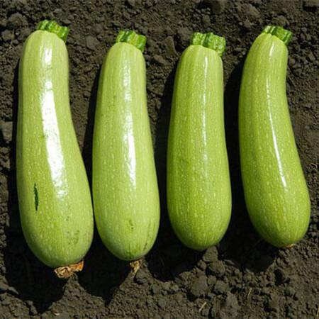 Семена кабачка Каризма F1 Syngenta от 10 шт, Фасовка: Мини упаковка 10 шт