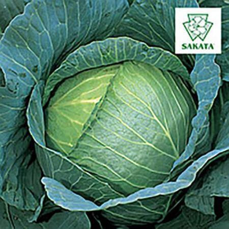 Семена капусты б/к Марлу F1 Sakata 1 000 шт, Фасовка: Проф упаковка 1 000 шт