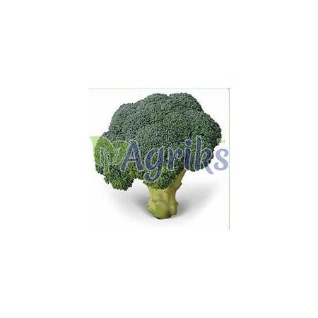 Семена капусты брокколи Тритон F1 Sakata от 1 000 шт, Фасовка: Проф упаковка 1 000 шт