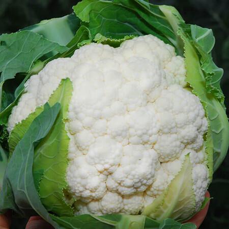 Семена капусты цветной Немо F1 Clause от 20 шт, Фасовка: Мини упаковка 20 шт