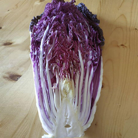 Семена капусты пекинской Ямада F1 (КС 888 F1) Kitano Seeds от 500 шт, Фасовка: Проф упаковка 500 шт