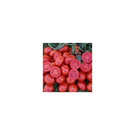 Семена томата детерминантного 1311 F1 Lark Seeds 5 000 шт, Фасовка: Проф упаковка 5 000 шт