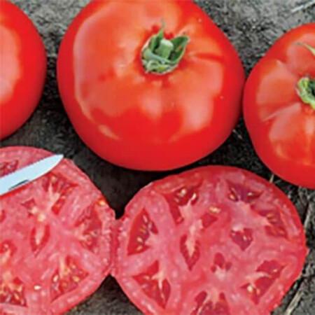 Семена томата детерминантного 1504 F1 Lark Seeds от 500 шт, Фасовка: Проф упаковка 500 шт