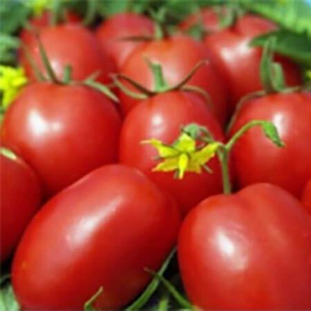 Насіння томату детермінантного 1509 F1 Lark Seeds від 500 шт, Фасовка: Проф упаковка 500 шт
