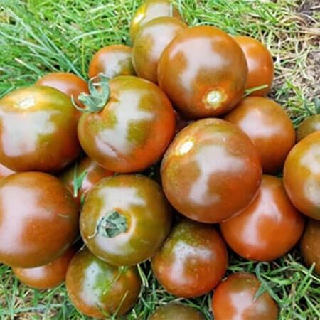 Семена томата индетерминантного Мавр F1 Lark Seeds от 250 шт, Фасовка: Проф упаковка 250 шт