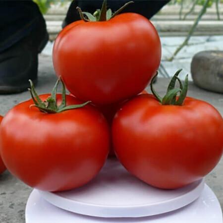 Семена томата индетерминантного Прайд F1 Lark Seeds от 250 шт, Фасовка: Проф упаковка 250 шт