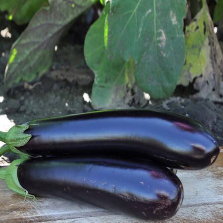 Семена баклажана Эстелле F1 Rijk Zwaan от 100 шт, Фасовка: Проф упаковка 100 шт